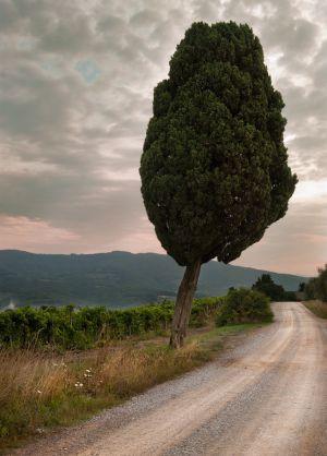 ItalyTuscany_0810_020.jpg